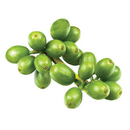 Green Coffee Bean Extract has beneficial antioxidant properties.